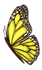 yellow butterfly 2A.png