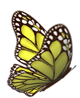 yellow butterfly 2.png