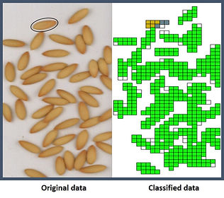 Melon seed classification.jpg