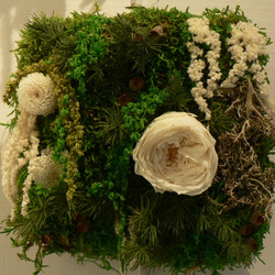 Johana- Tendresse- 15x15- 90€