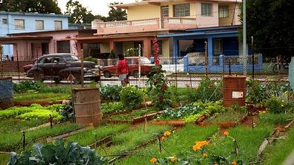 WEB Havana city urban argiculture.jpg