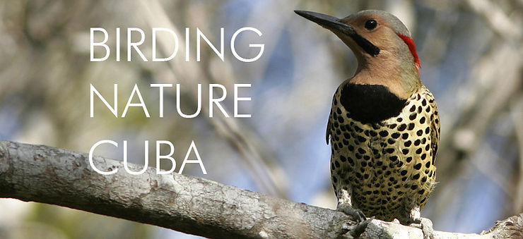 BIRD CUBA2a.jpg