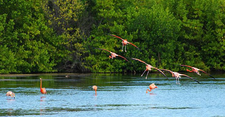Flamingos Zapata (612x612).jpg