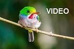 CubanTody (webVIDEO).jpg