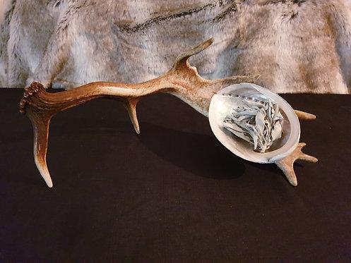 Deer Antler Abalone Purifying Tool