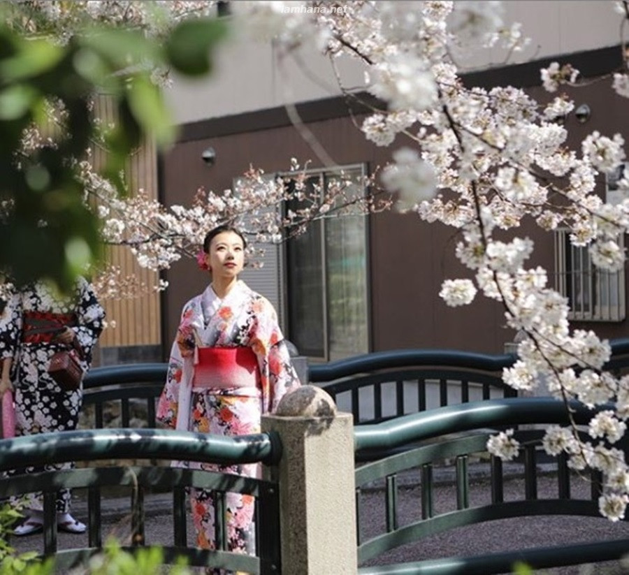 a picture taken with cherry blossoms in front of the house.