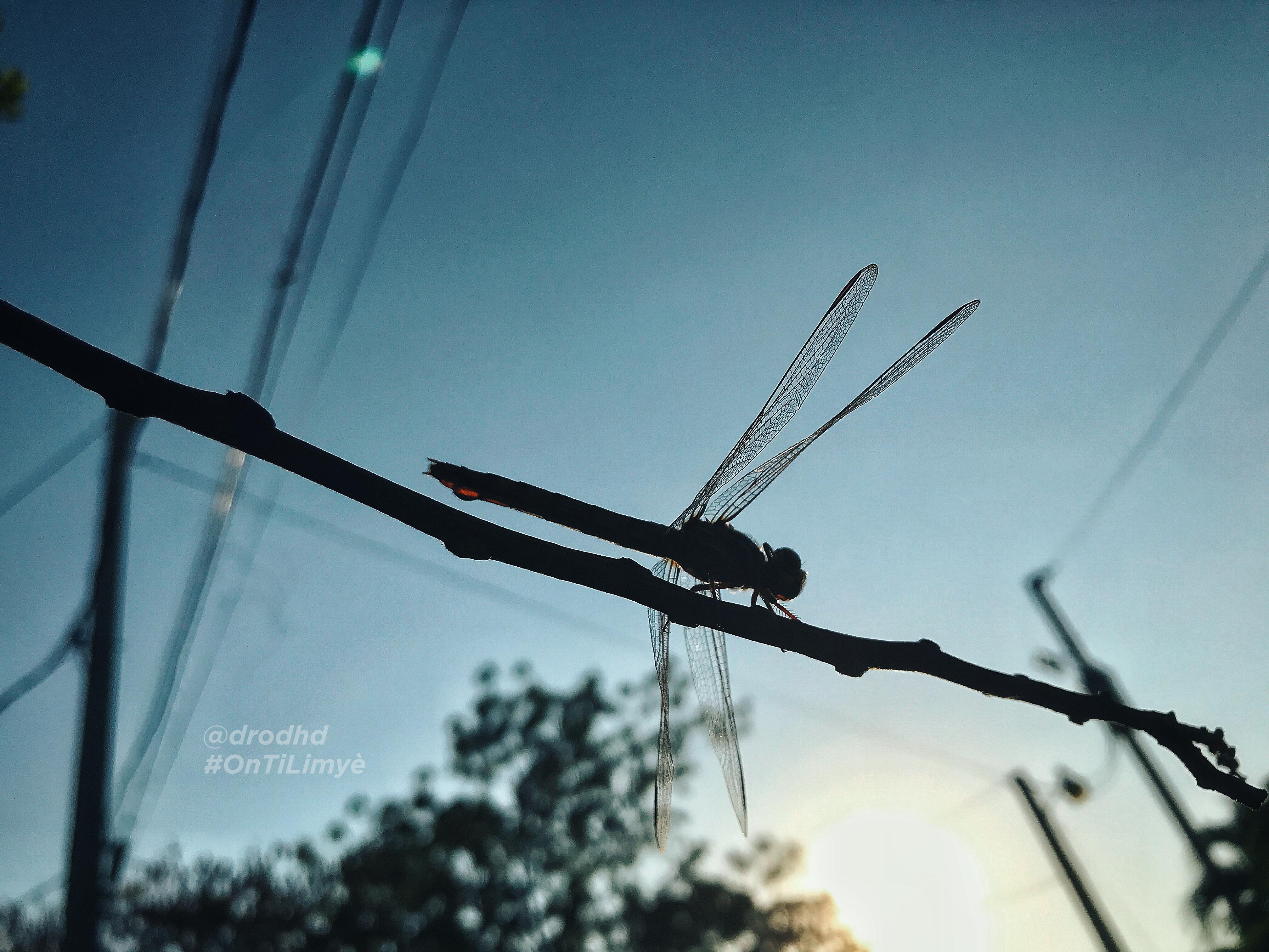 Taken by D-ROD