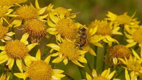 통풍의 염증과 통증을 다스리는 유기농 아니카 크림