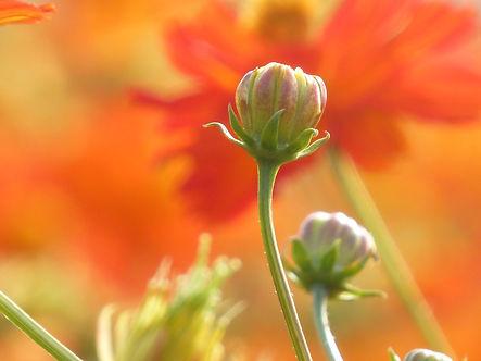 flower-2140061_1920.jpg