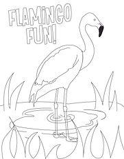 FlamingoColoringPage.jpg