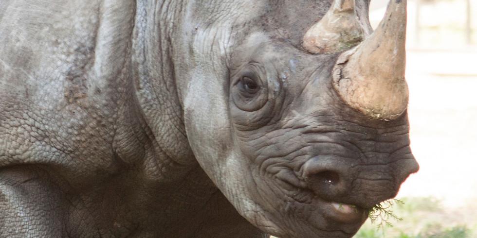 World Rhino Day @ LRZ!