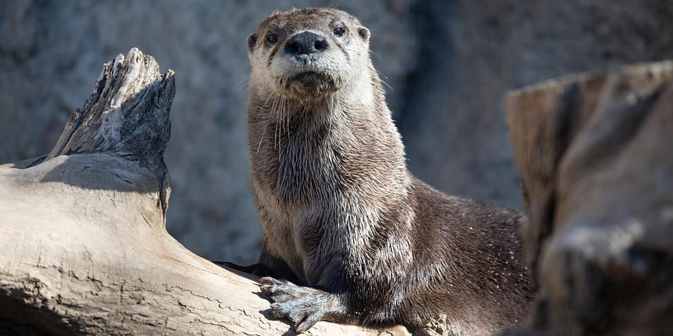 World Otter Day