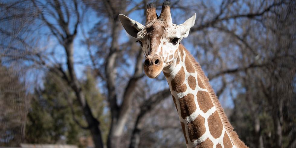 Father's Day & World Giraffe Day at LRZ