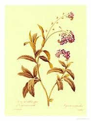 Ботаника, цветы, букеты, озеленение, ландшафтный дизайн