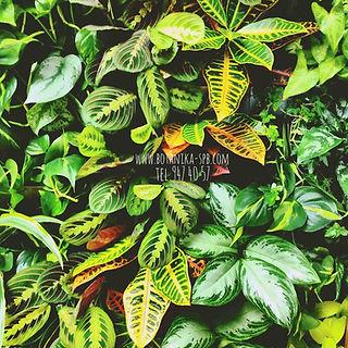 Ботаника, вертикальное озеленение, оформление офисов