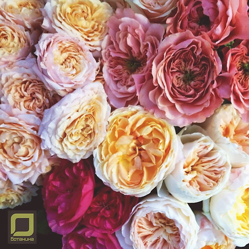 Цветы на сумму 25000
