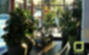 Ботаника, цветочная мастерская, озеленение офисов, домов, квартир, ландшафтный дизайн, зимний сад, оформление цветами