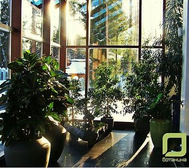 Ботаника СПб, озеленение помещений, озеленение офисов.