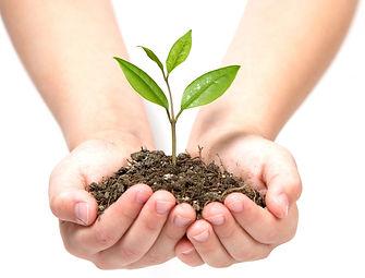 Ботаника спб, пересадка растений, озеленение, уход за растениями.