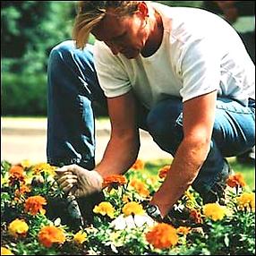 Уход за растениями в офисе, дома, на участке, лечение растений, посадка, перевалка цветов, удобрение, обработка растений, фитодизайн помещений, озеленение, создание зимних садов, ландшафтный дизайн, уличные цветы, полив, специалист по растениям, флорист