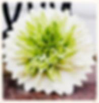 #Цветы #Букет #невесты #Оформление #Ботаника #Тренд #Креативный #цветочная мастерская