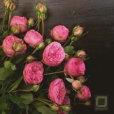 Пионовидные розы. Букет на Валентина спб.