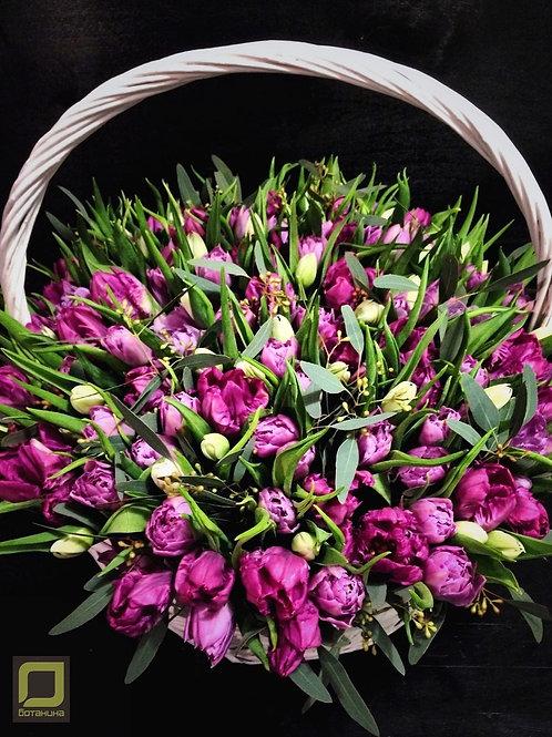 151сортовых тюльпанов. 137