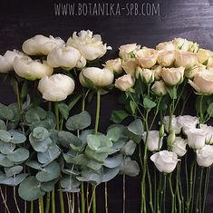 Ботаника. Доставка цветов спб