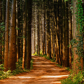 pathway-in-between-trees-at-daytime-1112