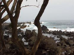 Maui (7)