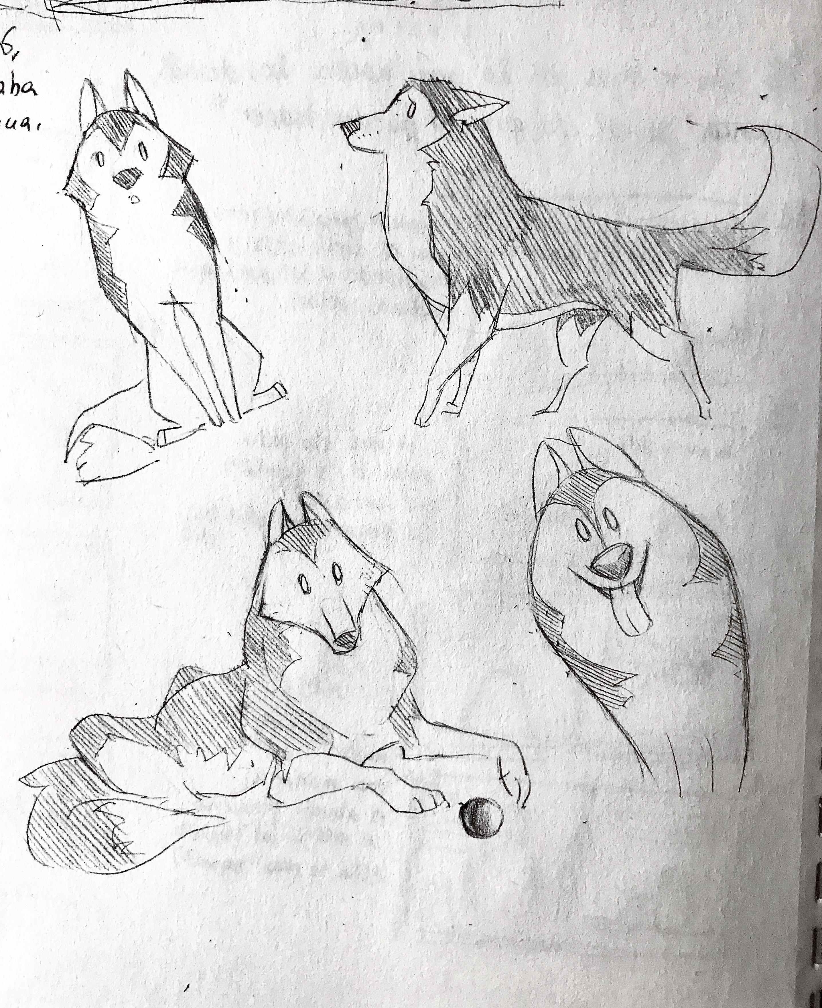 Husky sketches