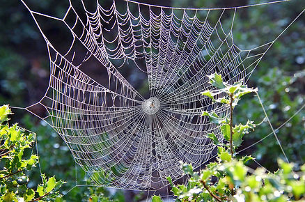 Canva - Spider Web Beside Leafed Plant.j