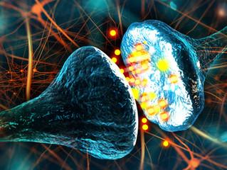 Neuroplaszticitás - a változás lehetősége minden életkorban