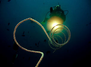 Diver with light- night dive..jpg