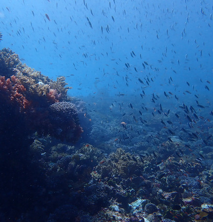 Diving in Alor with Nautika