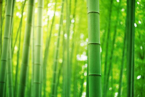 495329618_Bamboo-forest_edited.jpg