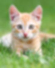 kitten-outside.jpg