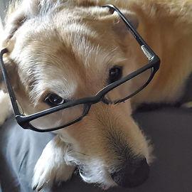 dexy_glasses.jpg