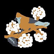 ssxbird | NEW BIRDERS