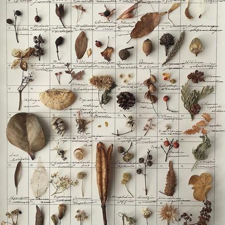Doğa Koleksiyonu