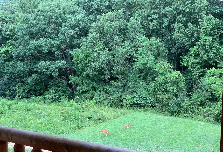Deer Feeding in the field