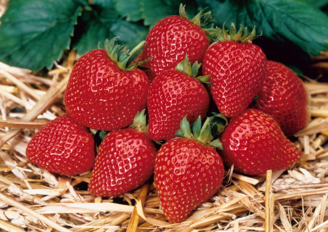 Home Harvest Strawberry Supreme.jpg
