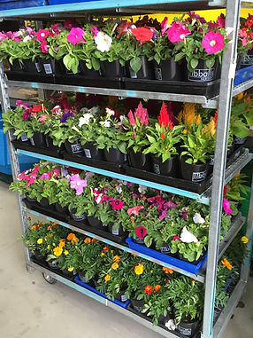 Potted Colour Trolleys 2016.jpg