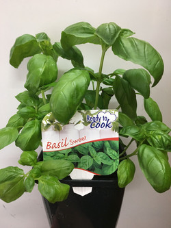 Ready to Cook Basil Sweet 125mm Pot.jpg