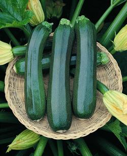 Zucchini Black Jack.jpg