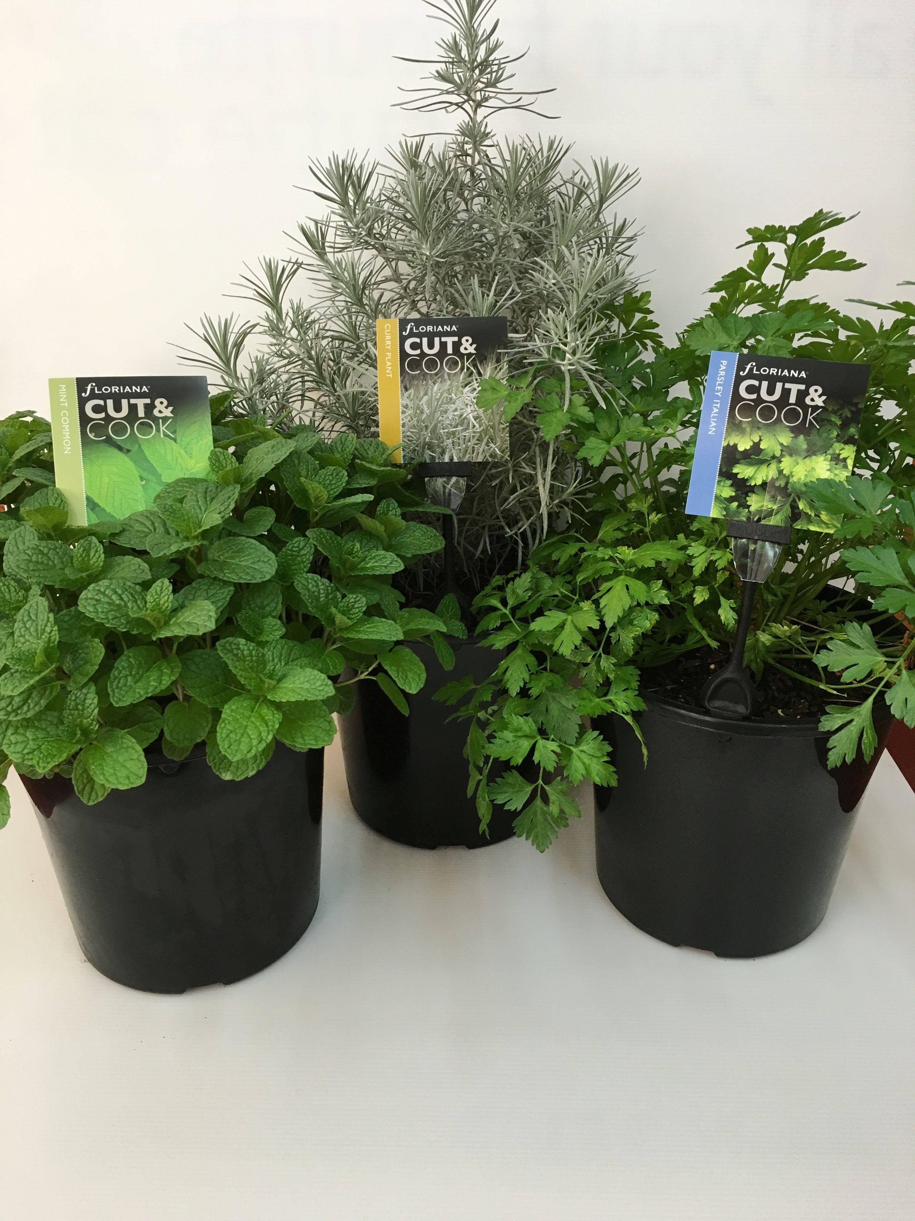 Floriana Cut & Cook 200mm Herb Pots x 3.jpg