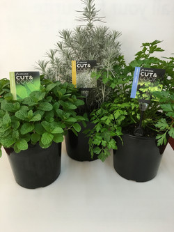 Floriana Cut & Cook 200mm Herb Pots x 3.jpg
