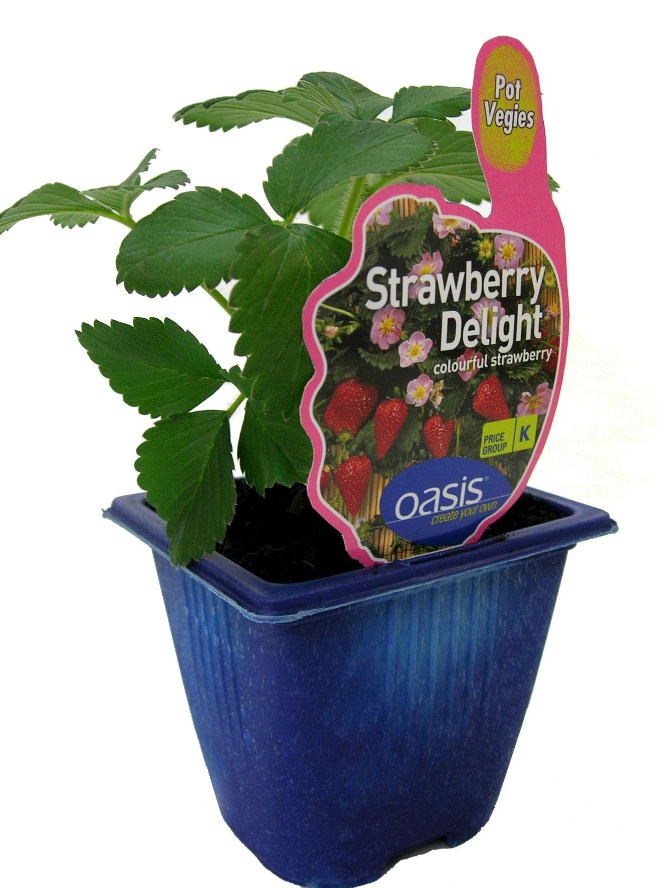 Strawberry Delight pack shot.jpg