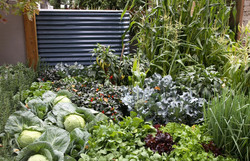 Oasis MIFGS mixed veg with water tank 15cm....jpg