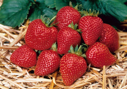 Home Harvest Strawberry Supreme.jpg